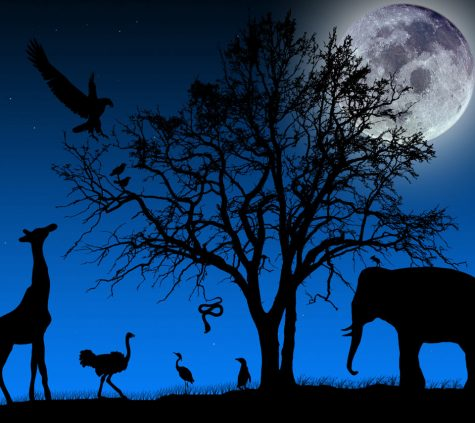 Animals of the night