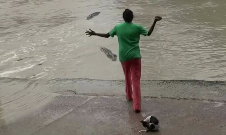 TO THE RESCUE: In a case of La Chancla in hand at it's best, a woman saves her small dog's life after a huge crocodile tries to attack them.