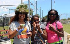 Cane Fest season