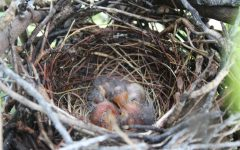 Photo of the Day: Baby birds