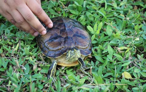 Class Pet Spotlight: Franklin the Turtle