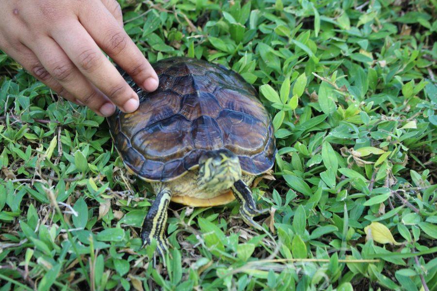 Class Pet Spotlight: Franklin the Turtle