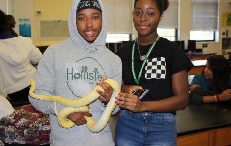 Snake exhibit